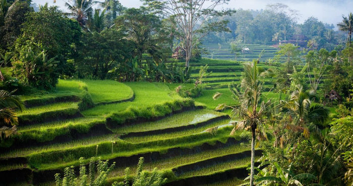 Best Places to Travel in 2015 Best Places to Travel in 2015 Best Places to Travel in 2015 bali nature indonesia sidemen morning hi 262412
