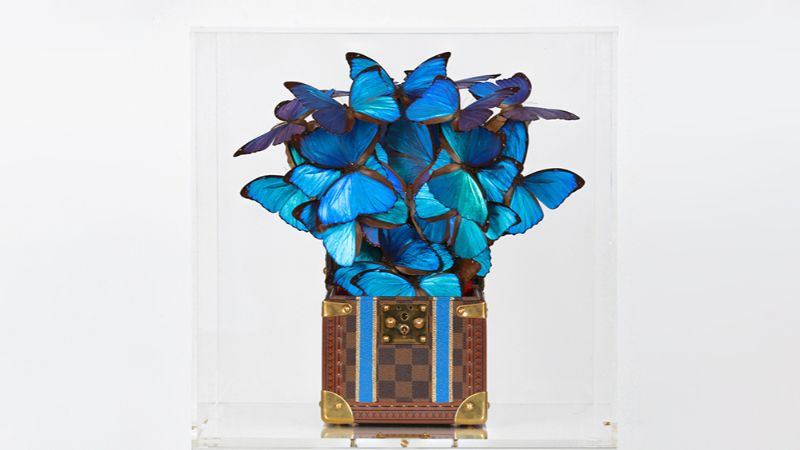 luxury brands Lyrical Artworks That Combine Luxury Brands With Rare Butterflies A Rising Talent That Combines Luxury Brands With Rare Butterflies 4