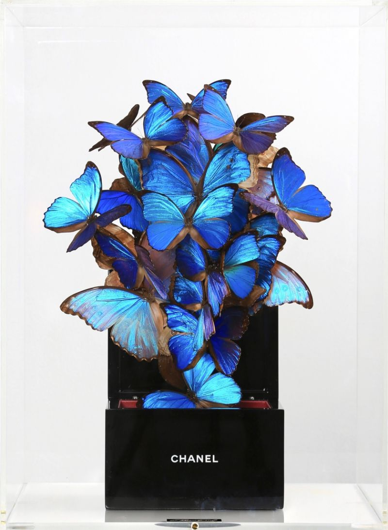 A Rising Talent That Combines Luxury Brands With Rare Butterflies (9) luxury brands Lyrical Artworks That Combine Luxury Brands With Rare Butterflies A Rising Talent That Combines Luxury Brands With Rare Butterflies 9